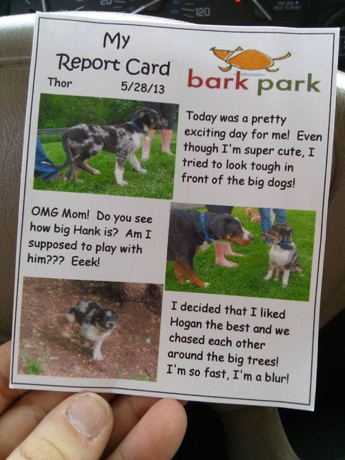 تصویر گزارش سگ ها - توجه به مشتری